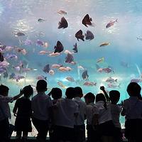 岳阳海立方海洋公园