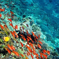 巴厘岛浮潜