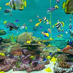 绵阳海之韵海底世界