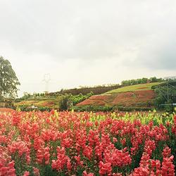 桂花湖亲子乐园