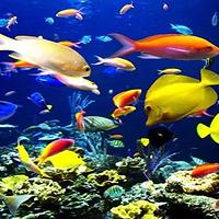 万海海洋世界
