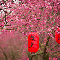 桂阳樱花园