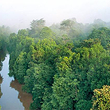 仙本那红树林
