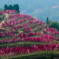 德阳红泉桃花谷国际乡村旅游景区
