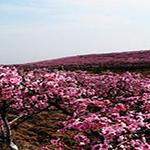 随州尚市桃花园