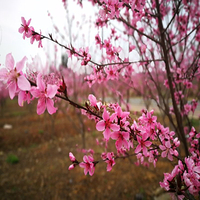 桂阳桃花溪风景区