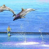 芜湖新华联大白鲸海洋公园
