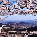 樱花山风景区