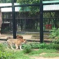 紫马岭动物园
