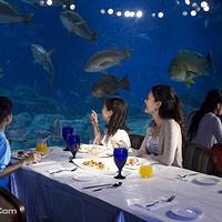 香港海洋公园餐券