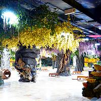 热带雨林温泉主题乐园