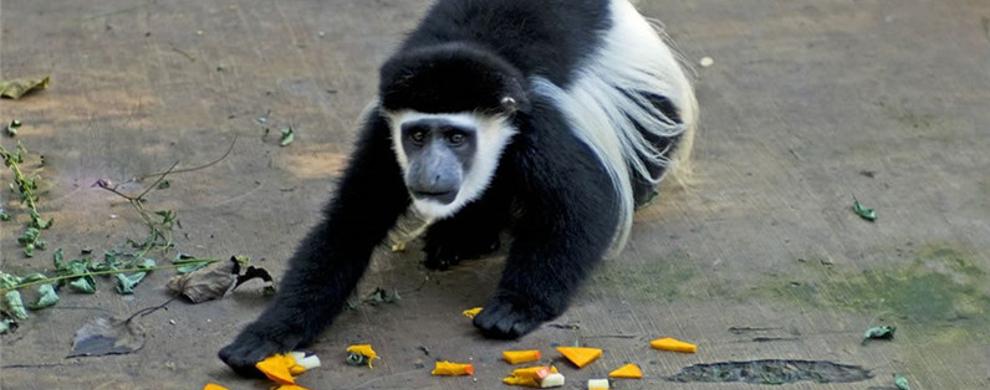 热带动物区