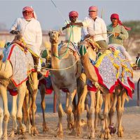 AI Shahaniya骆驼赛跑