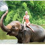 清迈骑大象