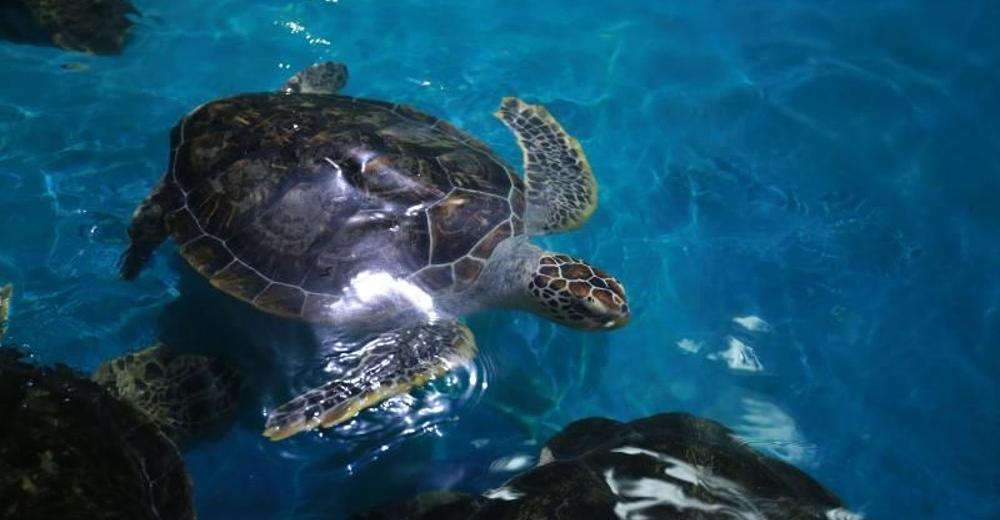 【双诞来袭】福州永泰欧乐堡海洋世界成人票图片