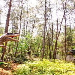 武汉松鼠部落森林假日公园