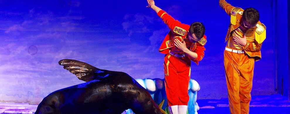 二、海象、海狮表演