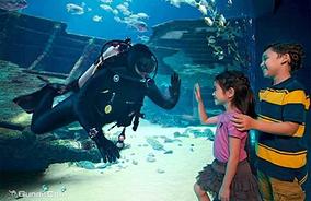 新加坡SEA海洋馆