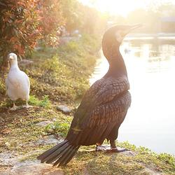 海口天鹅湖动物基地