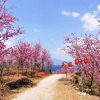 抚仙湖世家樱花园