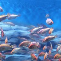 都匀金图海洋公园