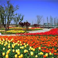 蚌埠花博园