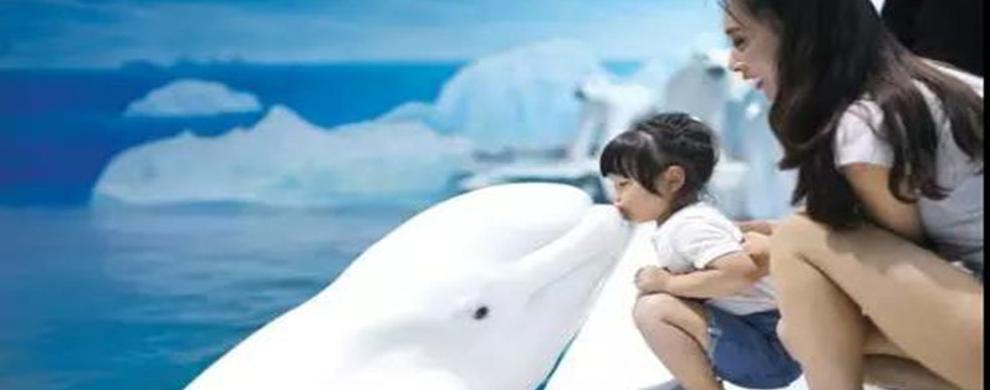 乐在亲近 海洋动物深互动