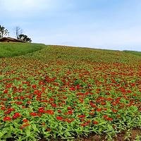川南大草原