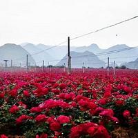 普者黑玫瑰庄园