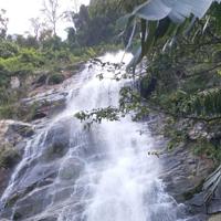 百花岭雨林文化旅游区