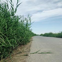 莎车国家湿地公园