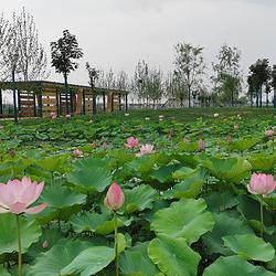 神农现代农业示范园
