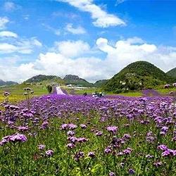 野玉海国际旅游度假区