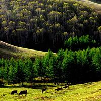 神仙谷七彩森林