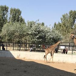 衡水野生动物园