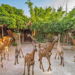 长鹿旅游休博园