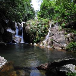 屏峰雨林公园