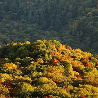 金龙山(横头山)国家森林公园