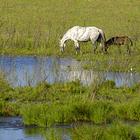 莫莫格自然保护区