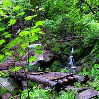 花脖山森林公园