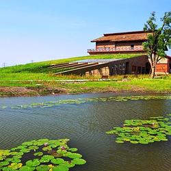 杭州湾湿地