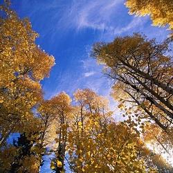 白桦林狂欢谷