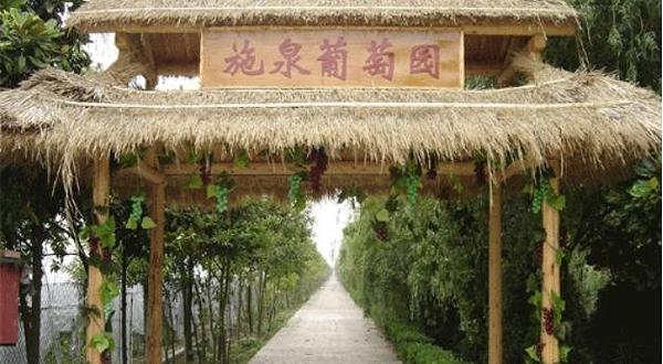 上海施泉葡萄园