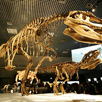 诸城恐龙博物馆