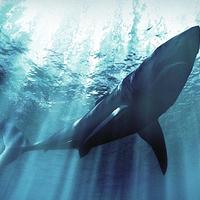 义乌海洋世界