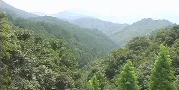 崇阳桂花森林公园