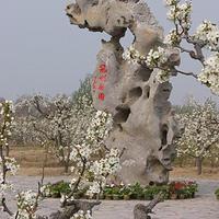 刘村梨园风景区