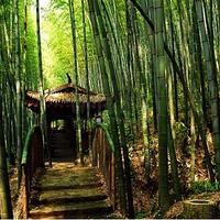 五峰山森林公园