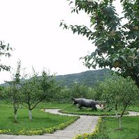 苍溪梨博园