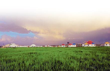 马兰花大草原